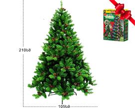 """ნაძვის ხე ,,ბუთქუჩა"""" 210 სმ გირჩებით და კენკრით - 399 ლარად"""